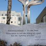 Flame-tree3s